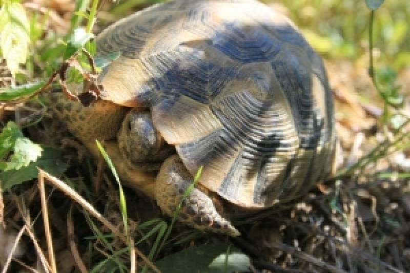 Cómo Evitar El Encogimiento Del Pene (También Conocido Como Turtling)